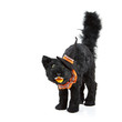 Black cat decoration for Halloween wearing a witch hat