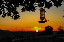 Humming Bird Enjoying A Sunset