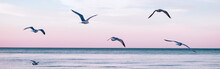 Large Group Flock Of Seagulls Birds On Sea Lake Water And Flying In Sky On Summer Sunset. Web Banner Header For Website. Toned With Retro Vintage Hipster Cold Filters. Outdoor Nature Fauna.