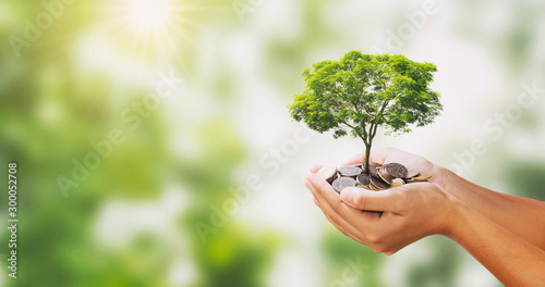 Cuadros en Lienzo  tree growing on pile of money in hand and green nature background