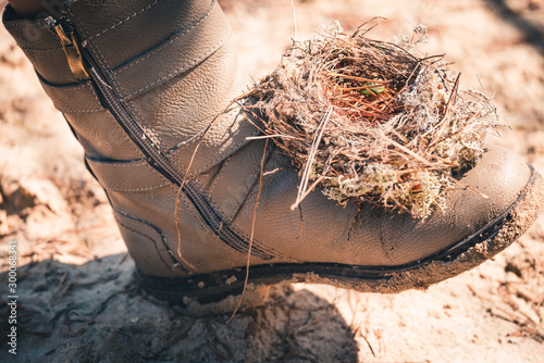 Valokuva  An empty nest made by birds from grass, branches and pine needles on womens shoe