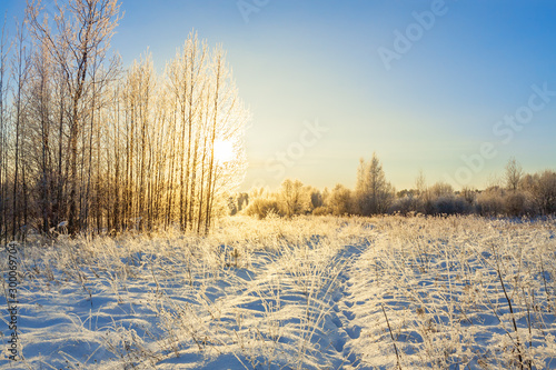 snowy winter landscape with forest and sun