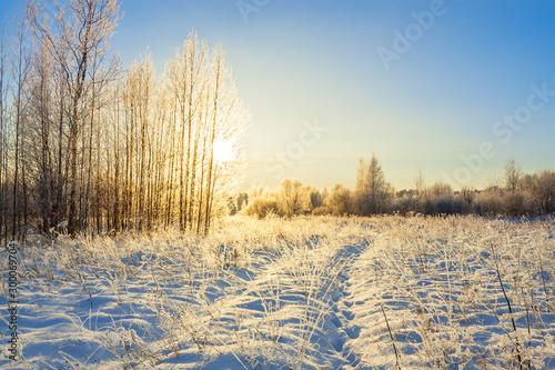 Foto auf Gartenposter Beige snowy winter landscape with forest and sun