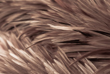 Beautiful Abstract White Gray And Brown Feathers On Dark Background And Colorful Soft Brown White Feather Texture On White Pattern