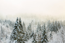 View Of A Forest With Cold Fog...