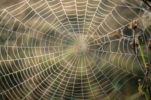 Close-Up Of A Back Lighted Spider Web With Water Drops