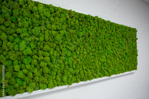 Fototapeta decorative moss for interior decoration. obraz
