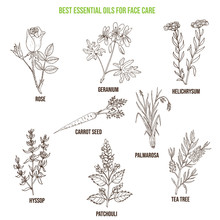 Best Essential Oils For Face C...
