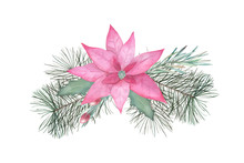 Watercolor Christmas  Composition With Poinsettia And Christmas Tree Branches On White Background. Winter Floral Print. Hand Drawn  Illustration