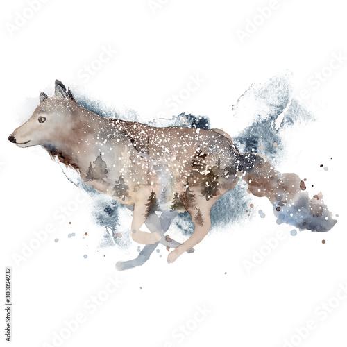 akwarela-wilczy-ilustracyjny-dziki-las