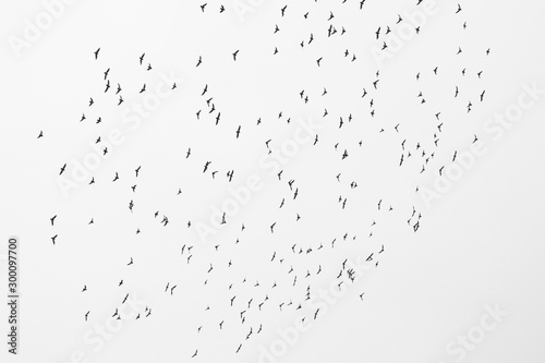 Valokuvatapetti Monochrome photo depicting flock of wild birds against sky