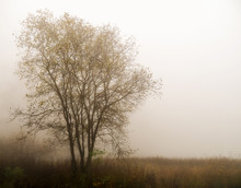 Fog Over Lake. Tree Silhouette In Mist. Tranquil Background Ideal Inspirational Message. Sad, Melancholic Image. Autumn.