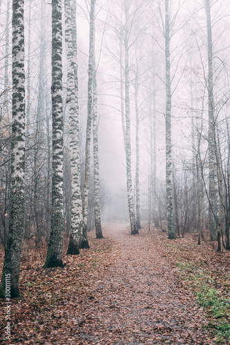 Foto auf Acrylglas Wald im Nebel misty forest a foggy autumn day