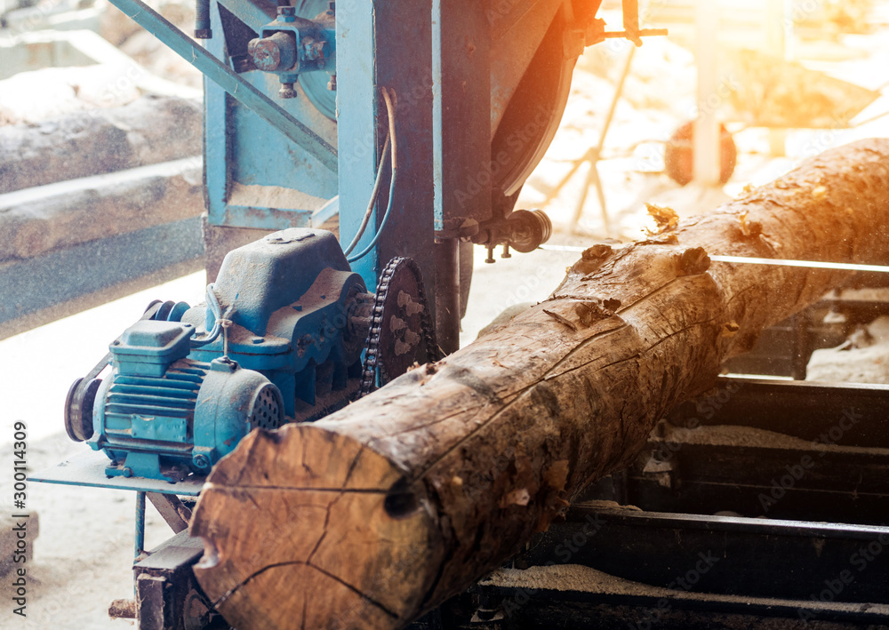 Fototapety, obrazy: Modern sawmill. Industry sawing boards from logs