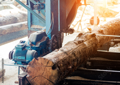 Modern sawmill. Industry sawing boards from logs Poster Mural XXL