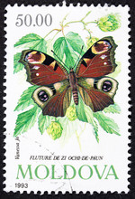 GROOTEBROEK ,THE NETHERLANDS - MARCH 15,2016 :  A Stamp Printed In Moldovia Shows Image Of Butterfly ,1993.