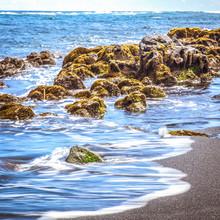Beach Beach Turtle