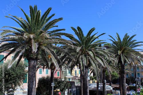 Tre alberi di palma con case e cielo Tapéta, Fotótapéta