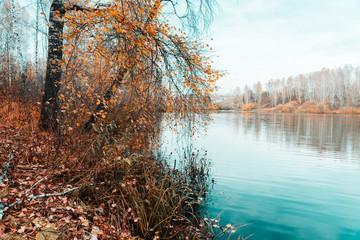 Fototapeta Rzeki i Jeziora Atmopheric autumn pond with birch forest on the shore