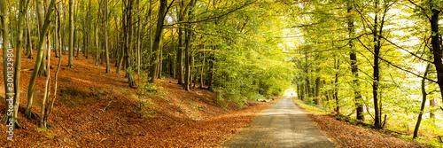 Valokuva  Herbst im Münsterland