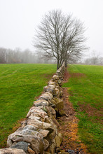 New England Stone Wall Leading...