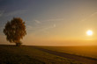 canvas print picture - Single tree in the sunset