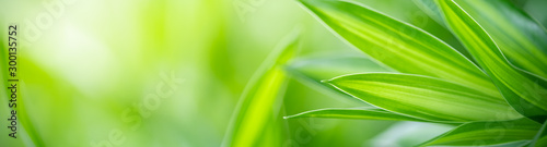 Closeup nature view of green leaf on blurred greenery background under sunlight with bokeh and copy space using as background natural plants landscape, ecology cover page concept. #300135752