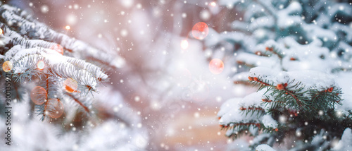 Obraz Frosty winter landscape in snowy forest. Christmas background with fir trees and blurred background of winter. - fototapety do salonu