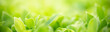 canvas print picture - Closeup nature view of green leaf on blurred greenery background under sunlight with bokeh and copy space using as background natural plants landscape, ecology cover page concept.