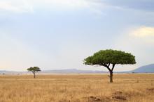 Serengeti National Park Landsc...