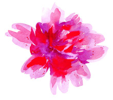 Beautiful Lush Flower Bud Isol...