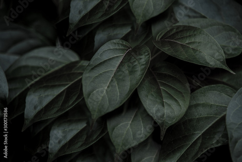 Fototapety, obrazy: tropical leaves, abstract green leaves texture, nature background