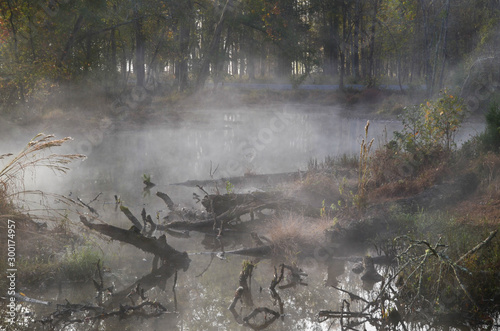 Fototapeta  Fog over the marshy water
