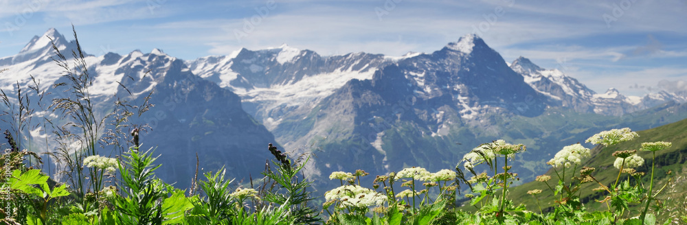 Fototapety, obrazy: Alpine peaks of Grindelwald and Jungfrau. Landskape background of Bernese highland. Alps, tourism, journey, hiking concept.