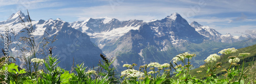Fototapeta Alpine peaks of Grindelwald and Jungfrau