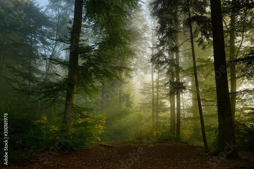 Valokuvatapetti Frühherbstlicher Waldmorgen