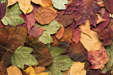 Background From Dry Autumn Colorful Leaves. Top View