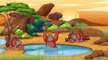 Scene With Three Chimpanzees B...
