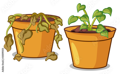 Spoed Foto op Canvas Kids Two potted plants on white background