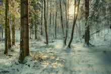 First Snow In A Forest On A Su...