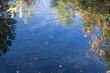 Fische im Wasser