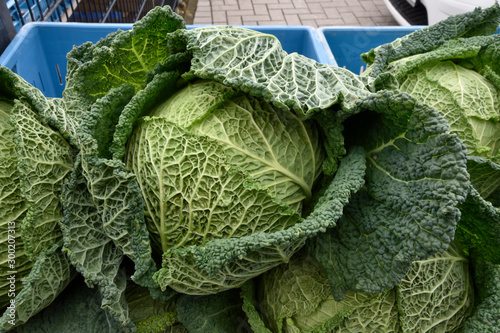 Savoy cabbage for sale at a farmers market. head of cabbage Fototapete