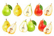 Pear fruit set watercolor isolated on white background