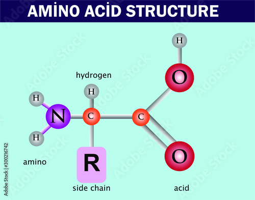 amino acid structure. chemistry lesson Wallpaper Mural