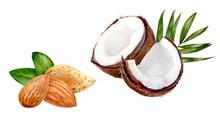 Almond Coconut Set Composition...