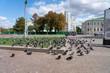 Tauben Plage in der Stadt