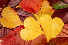 Autumn Leaves Of Different Colors, Autumn Background. Leaves Close-up. Leaves In The Form Of Hearts.