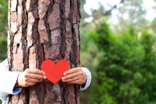 A Senior People Woman Hugging A Tree Trunk And Holding A Red Heart Made Of Paper - Love For Outdoors And Nature - Earth's Day Concept. People Save The Planet From Deforestation