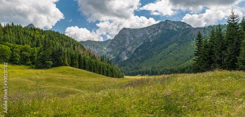 Fototapeta Little Meadow Valley (Dolina Małej Łąki) in Tatra Mountains. obraz