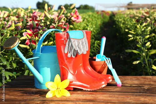 Fototapety, obrazy: Gardening tools, rubber boots and fresh lily on wooden table in flower field